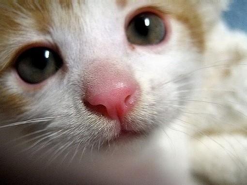 pink nose